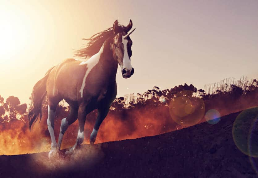 horse owners-trainers workers compensation in new york